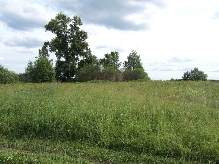 скачать траве через торрент - фото 5